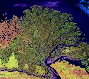 "the ""tree"" of the Lena Delta wilderness in Russia. Image Source"